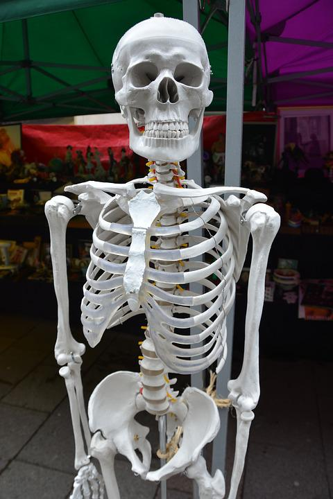 Free Photo Bones Medical Health Anatomy Human Skeleton Body Max Pixel