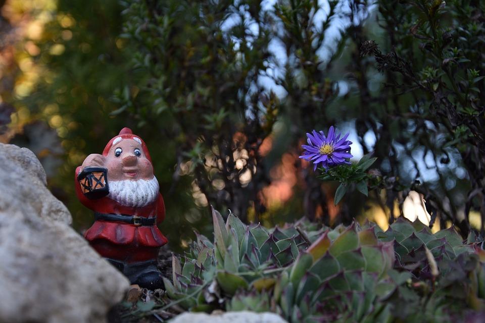 Dwarf, Gnome, Flower, Plant, Blossom, Bloom, Bonsai