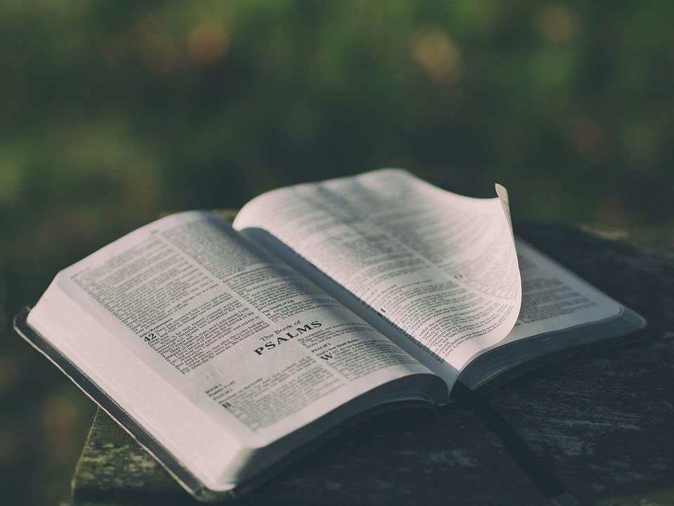 Bible, Blur, Book, Chapter, Close-up, Information