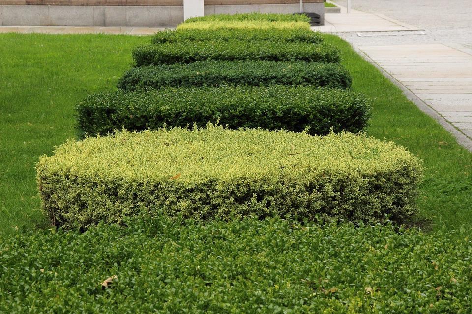 Book, Hedge, Green, Park, Section, Flora, Trimmed, Cut