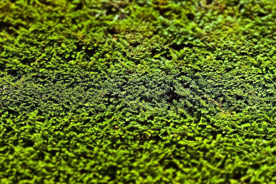 Hedge, Boxwood, Garden, Book, Green, Evergreen, Leaves