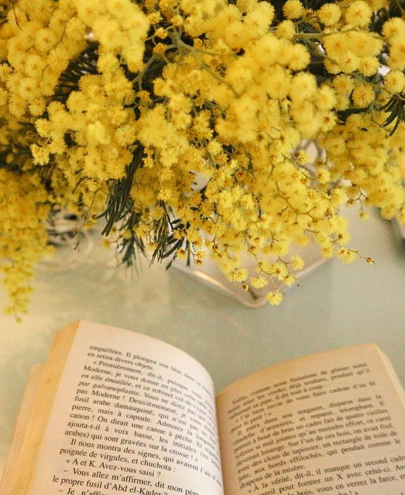 Mimosa, Book, Yellow, Old, Flower, Reading, Study, Page