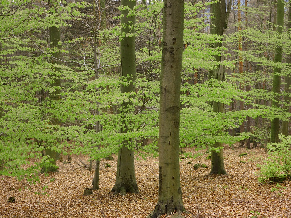 Book, Palatinate Forest, Spring, Mixed Forest, Hiking