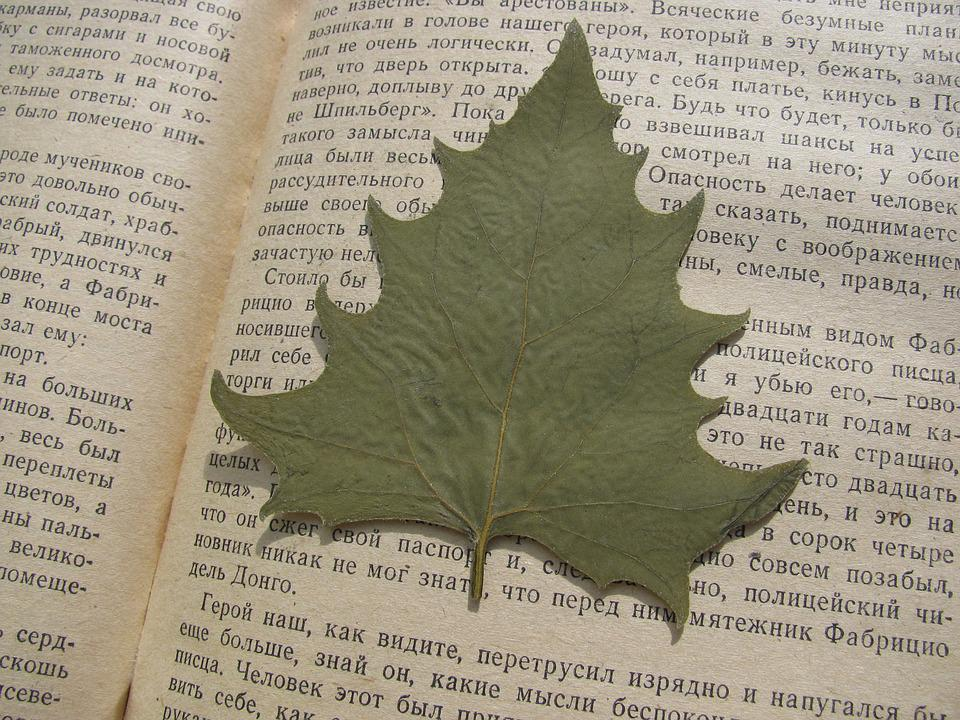 Herbarium, Sheet, Leaves, Book, Autumn