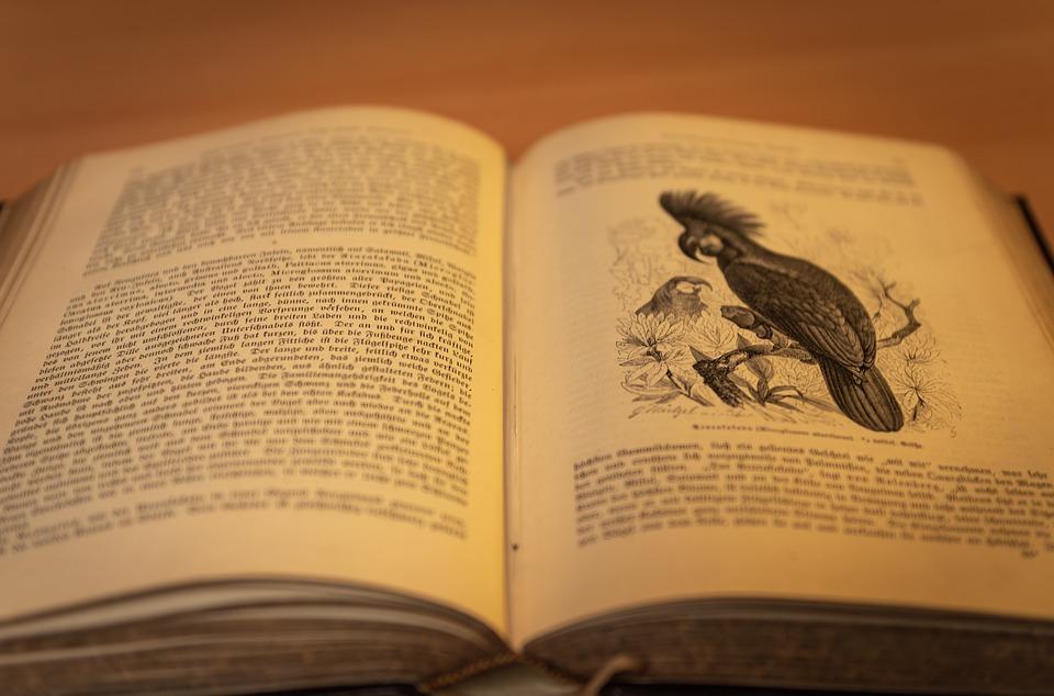 Book, Antique, Book Stack, Literature, Knowledge, Old