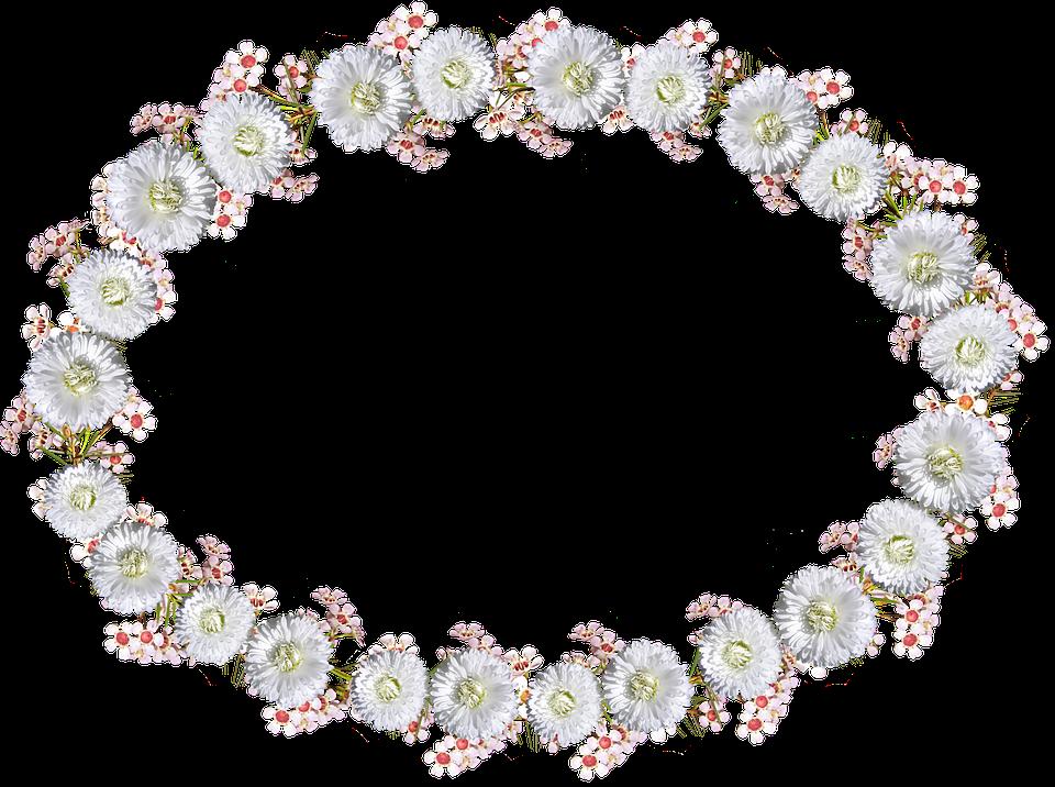 Frame, Border, Daisy, White Floral