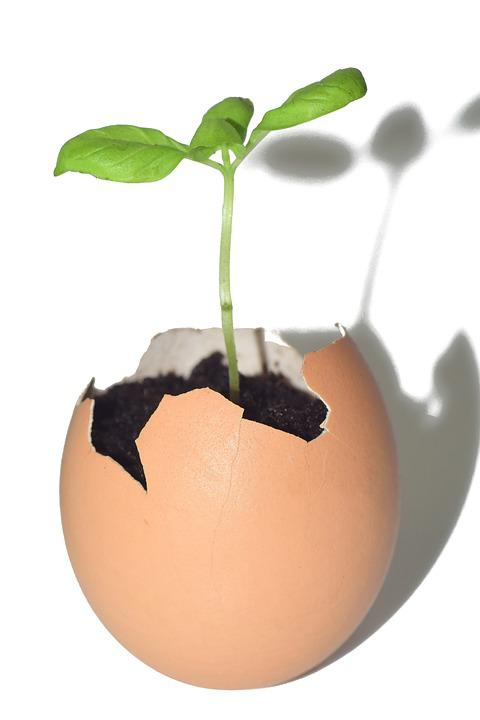 Tree, Small, Tender, New, Young, Born, Egg, Eggshell