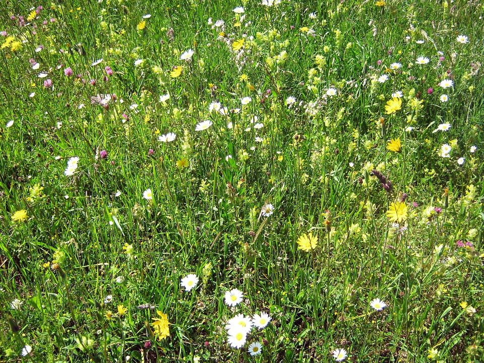 Flower Meadow, Mountain Flowers, Botanical, Flowers