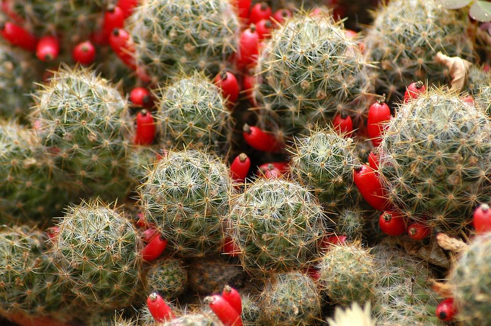 Cactus, Flowers, Plants, Botanical Garden, Affix