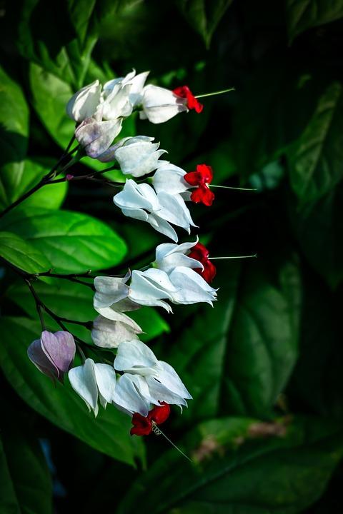 White Flowers, Greenhouse, Botanical Garden, Nature