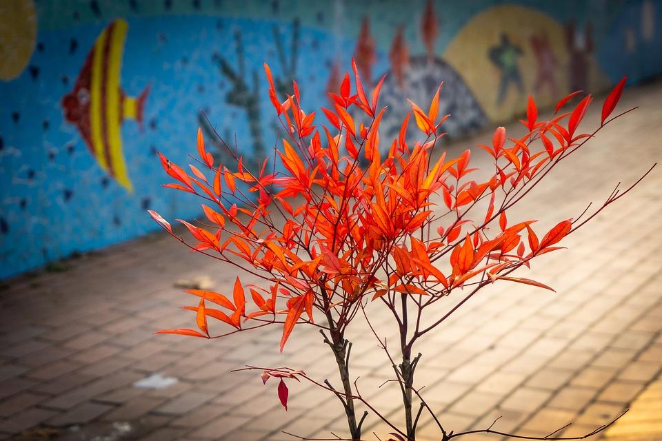 Mini Maple, Red Maple, Botanical Garden, Light, Nature