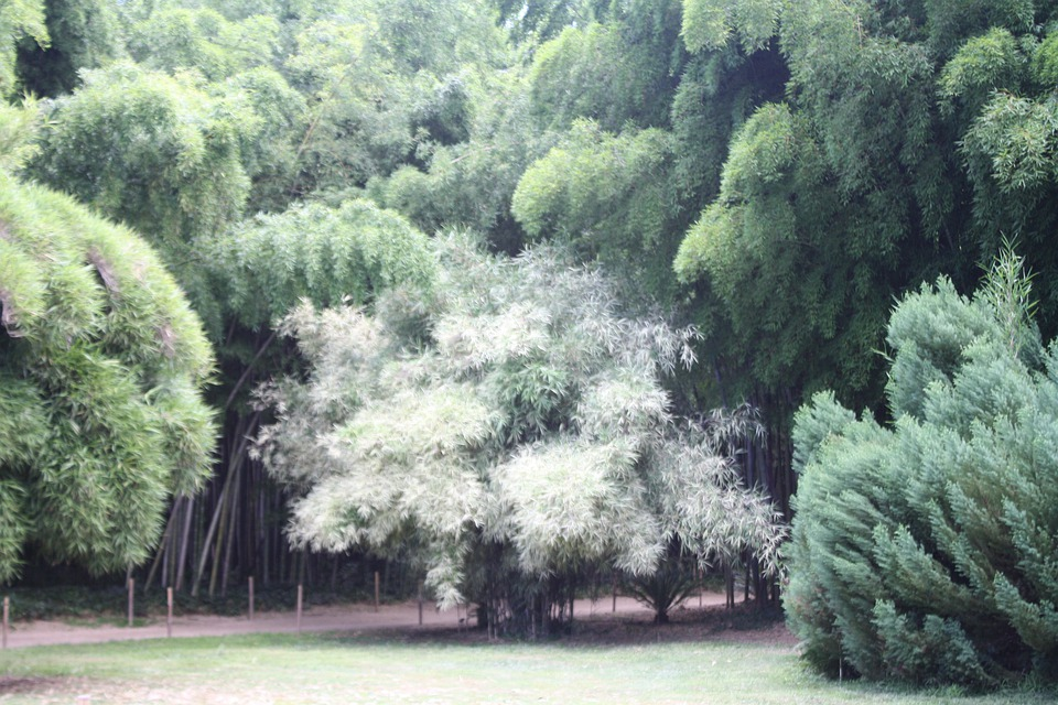 Bamboo, Ardèche, Plant, Botanical Garden