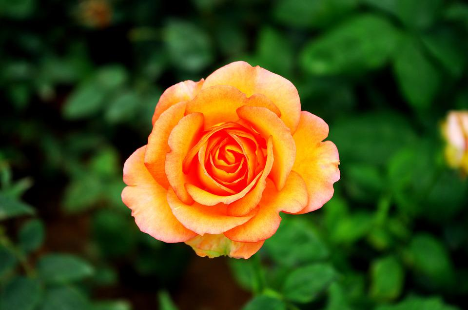 Flower, Beautiful, Plant, Botanical Garden
