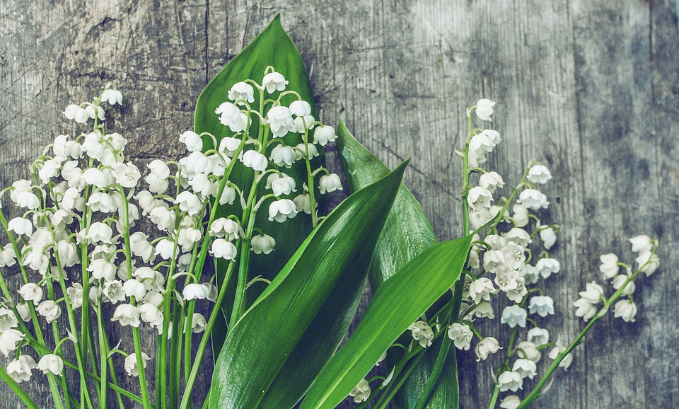 Lilies Of The Valley, Wood, Blossom, Botanic, Botanical