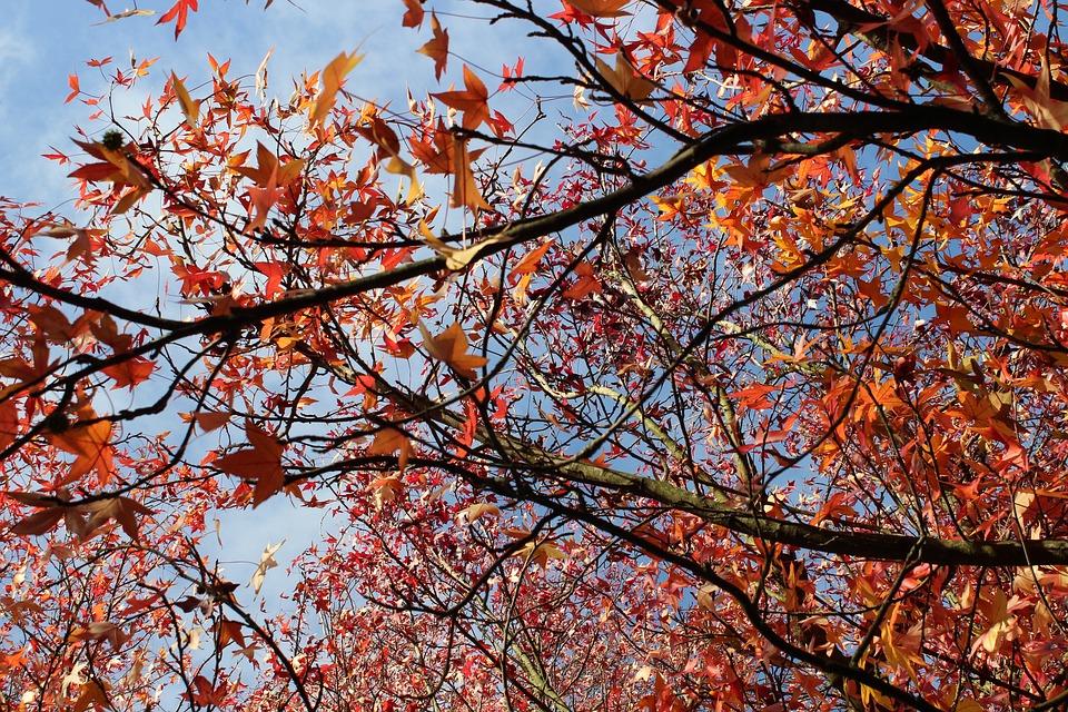The Bomb, Nature, Red, Botanical, Flora, Petals, Season