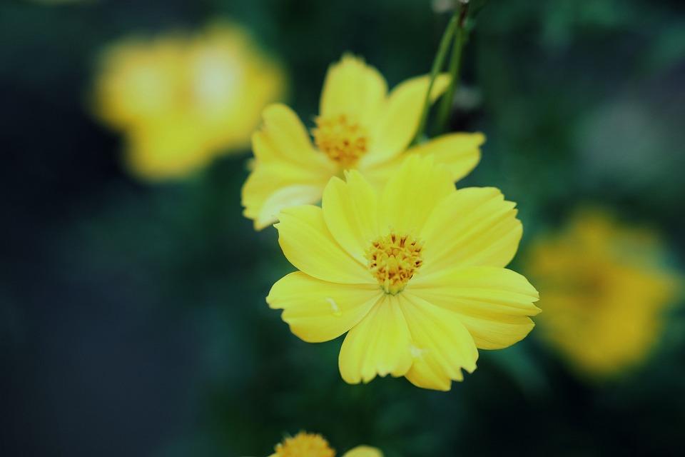 Flowers, Bloom, Botany, Blossom, Nature, Macro, Plant