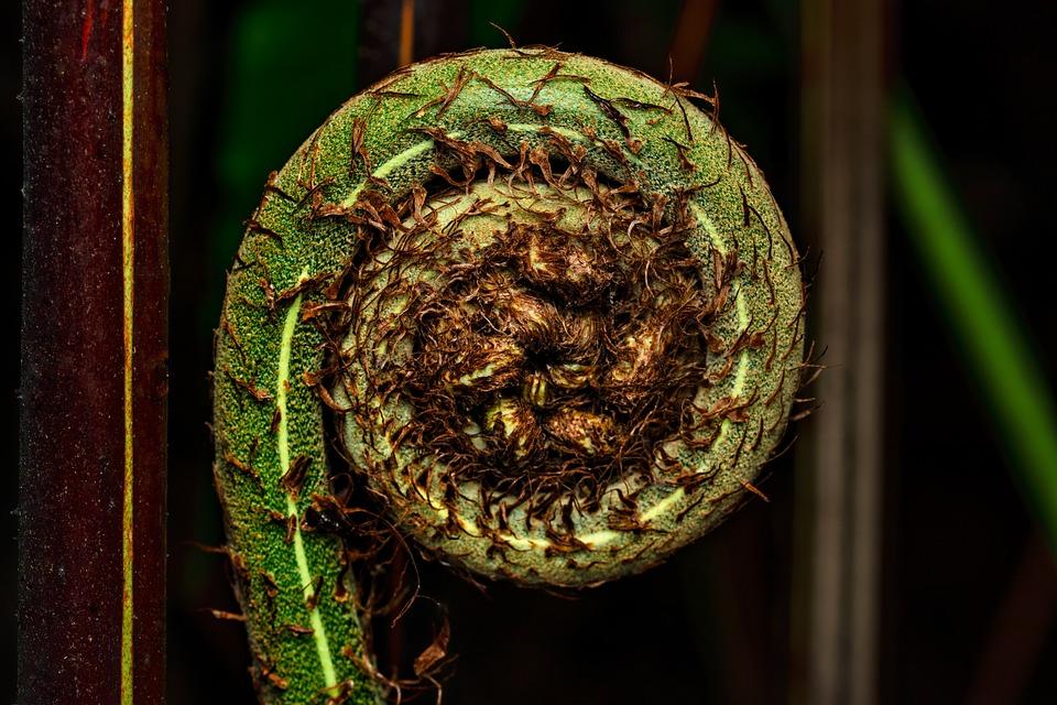Leaf, Fern, Plant, Flora, Botany, Nature