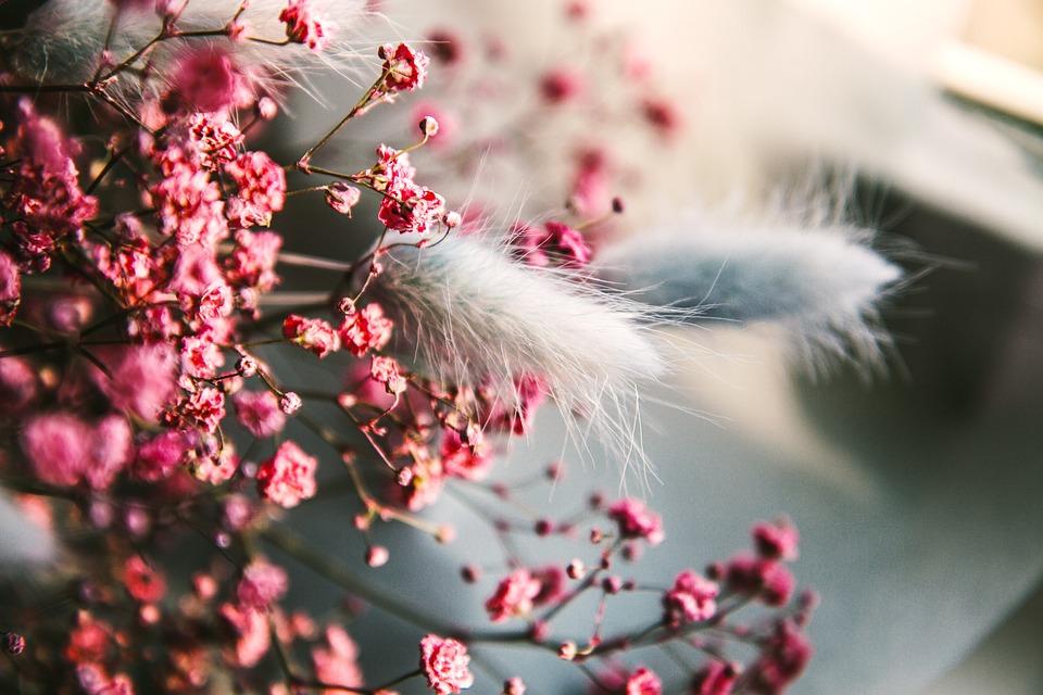 Flora, Flowers, Decorative, Botany, Color, Pink