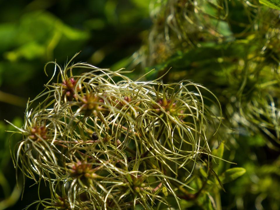 Flower, Flowering, Bush, Plants, Flora, Botany, Garden