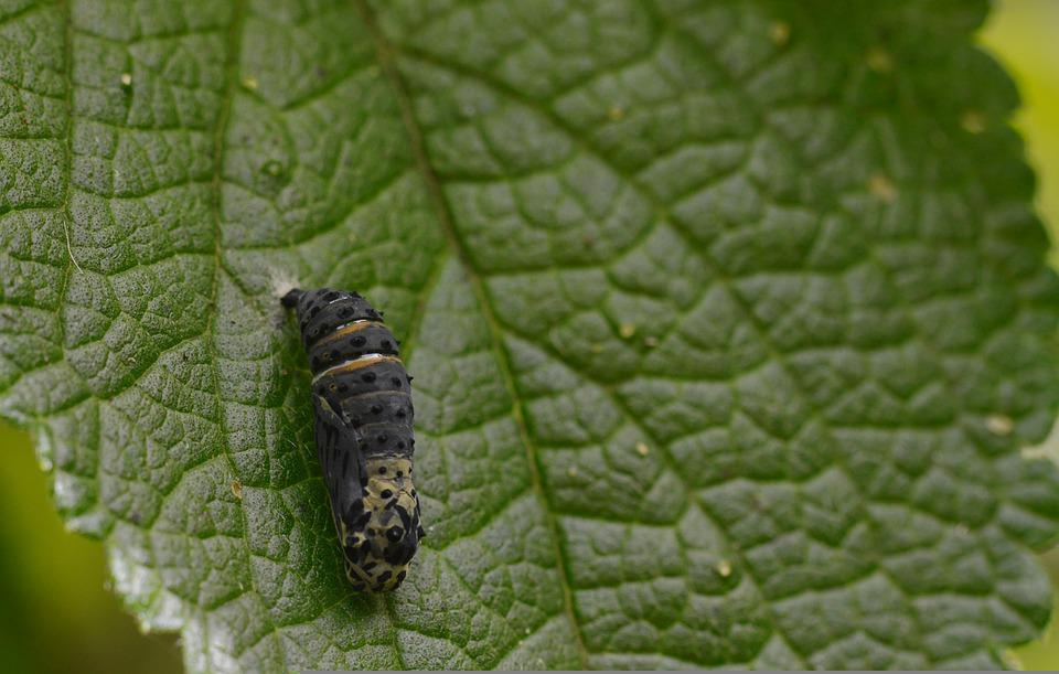 Costa Rica, Plant, Leaf, Flora, Nature, Botany, Pupa