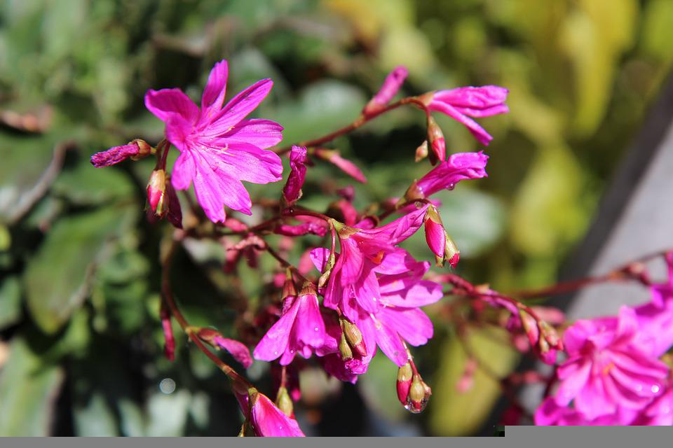 Flowers, Petals, Buds, Plants, Nature, Flora, Botany