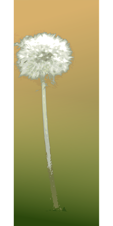 Dandelion, Flower, Autumn, Summer, Botany, Plant