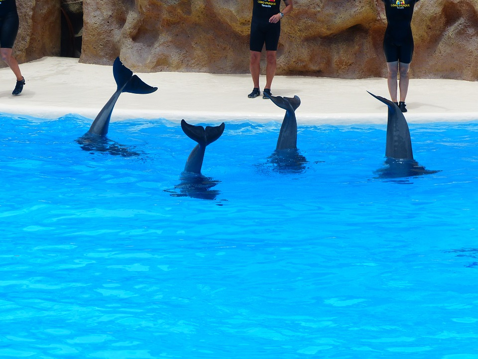 Bottlenose Dolphin, Dolphins, Tail Fins, Fins