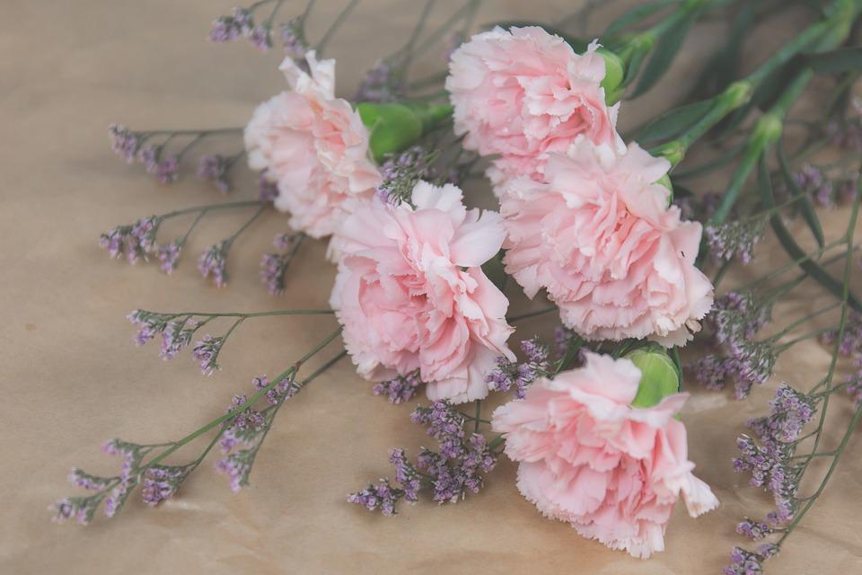 Nature, Blooms, Blossom, Bouquet, Carnation, Color