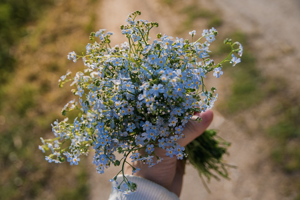 Me-nots, Bouquet, Hand, Summer, Blue, Flower, Flowers