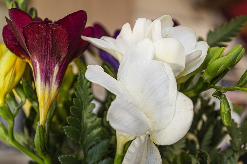 Flowers, Freesias, Colorful, Petals, Bouquet