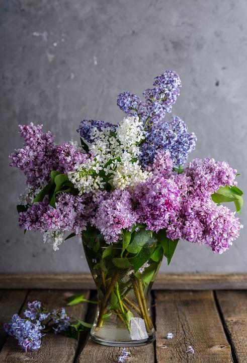 Lilac, Bouquet, Vase, Beautiful, Bloom, Nature, Flower