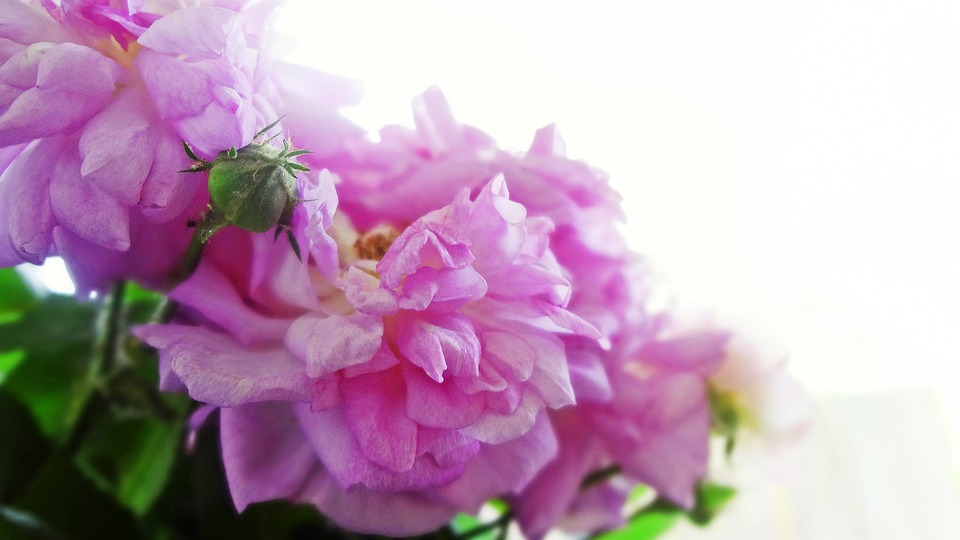 Flowers, Pink, Bouquet, Pink Flowers, Bright Flowers