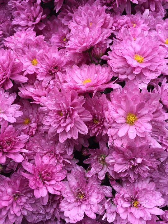 Free photo Bouquet Little Flower Pretty Blossom Flowers Pink - Max Pixel