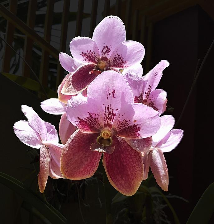 Flower, Purple, Color, Natural, Pink, Bouquet, Floral