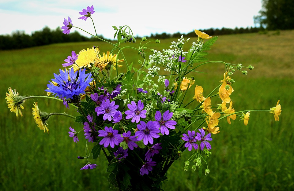 Flowers, Meadow, Bouquet, Plants, Spring, Nature