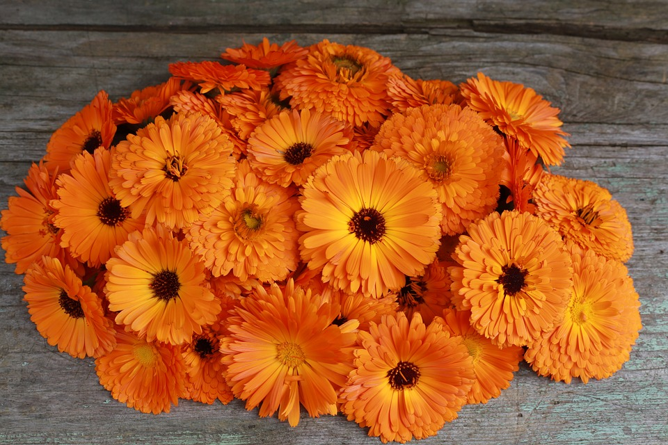 Marigolds, Spring, Lutein, Orange Flower, Bouquet