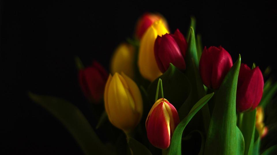 Tulips, Bouquet, Petals, Flowers, Spring, Nature