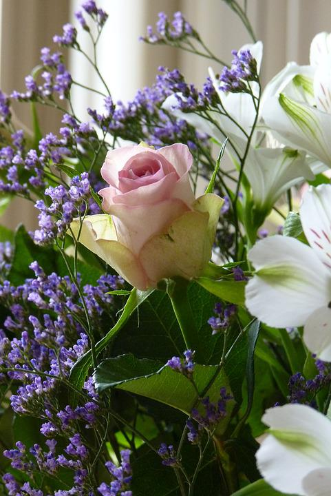 Rose, Bouquet, Photography
