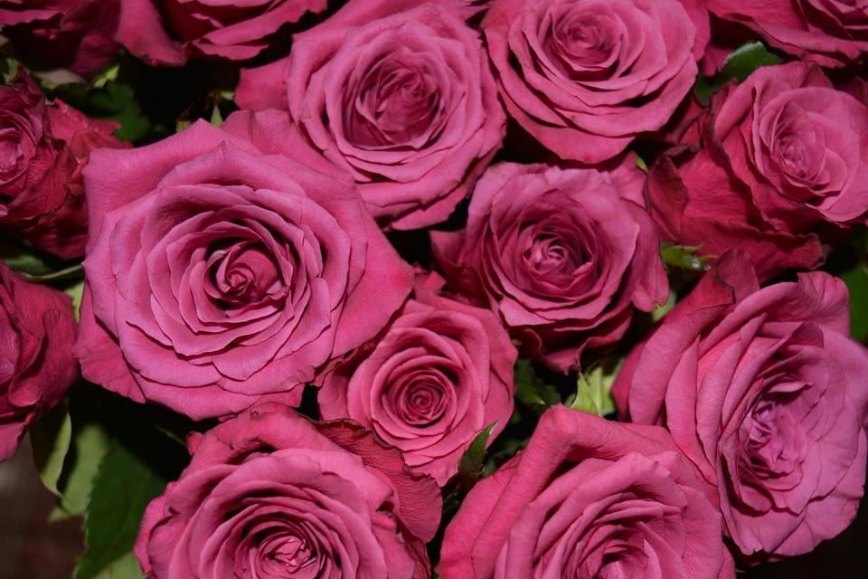 Dusky Pink, Roses, Blossom, Bloom, Bouquet, Pink