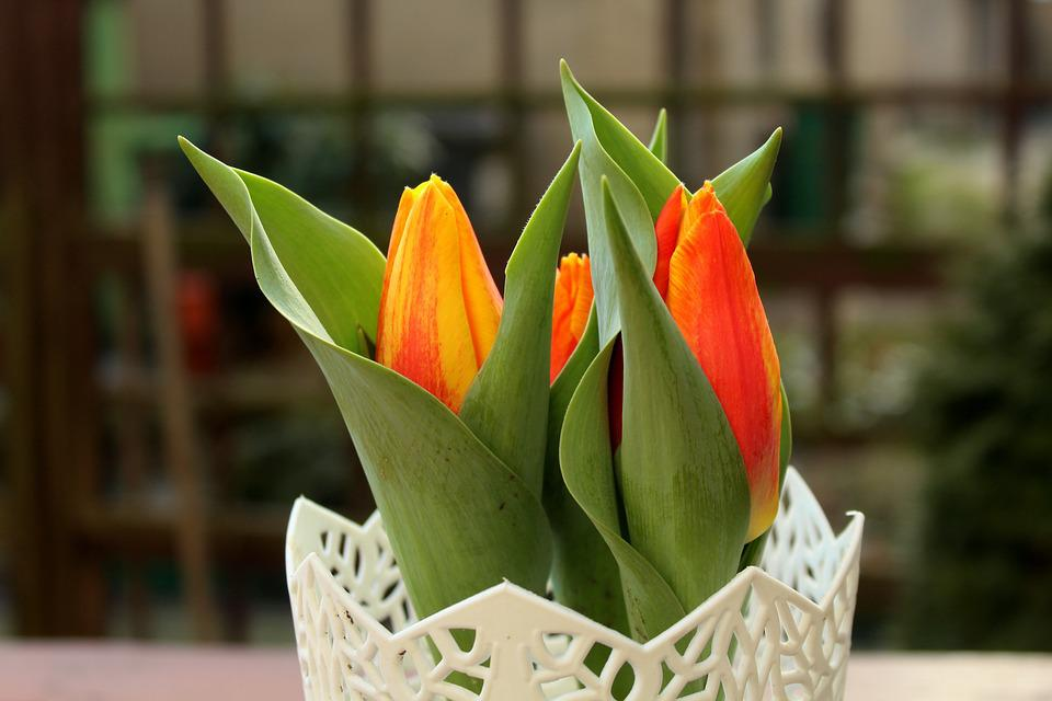 Tulips, Spring Flowers, Harbingers Of Spring, Bouquet