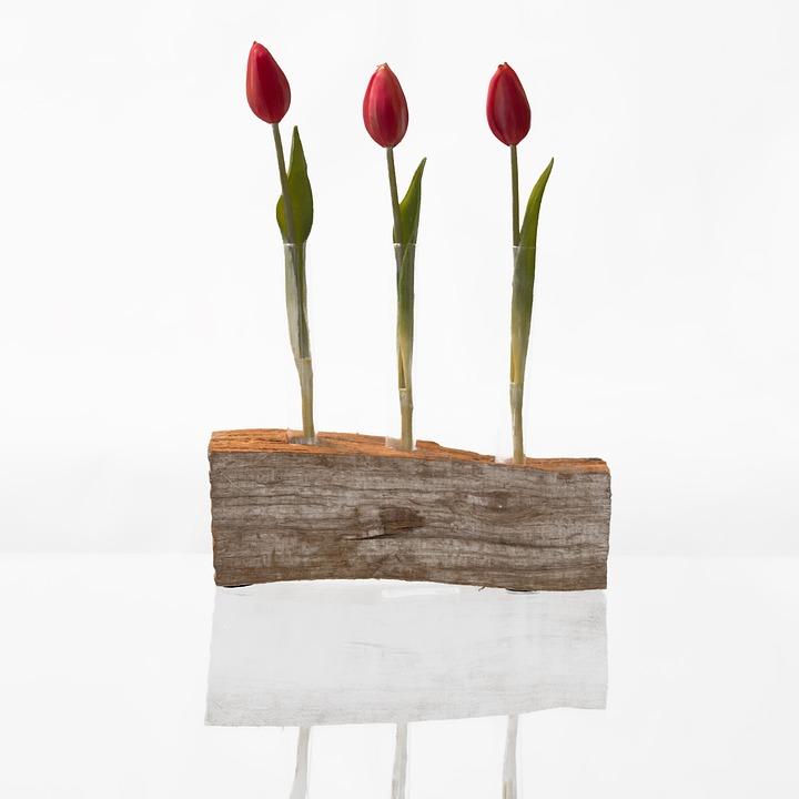 Flower, Nature, Tulip, Bouquet, Vase, Plant, Isolated