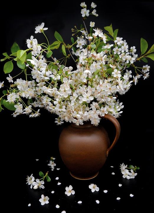 Vase, Still Life, Bouquet, White Flowers