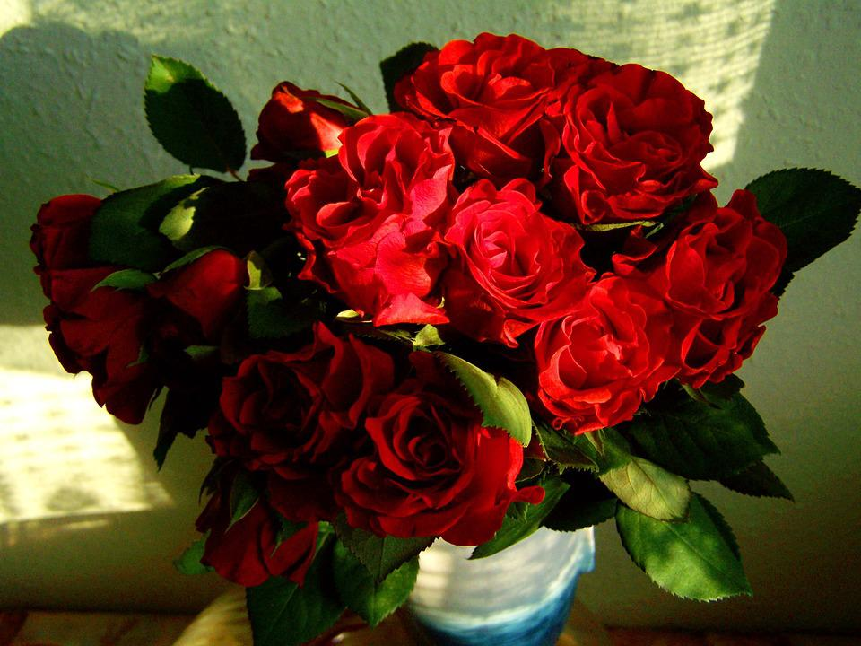 Red Rose, Bouquet, Flower, Women's Day