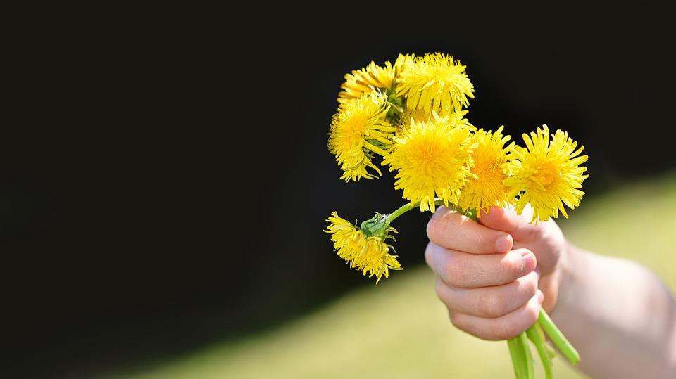 Dandelion, Flowers, Wildflowers, Yellow, Bouquet