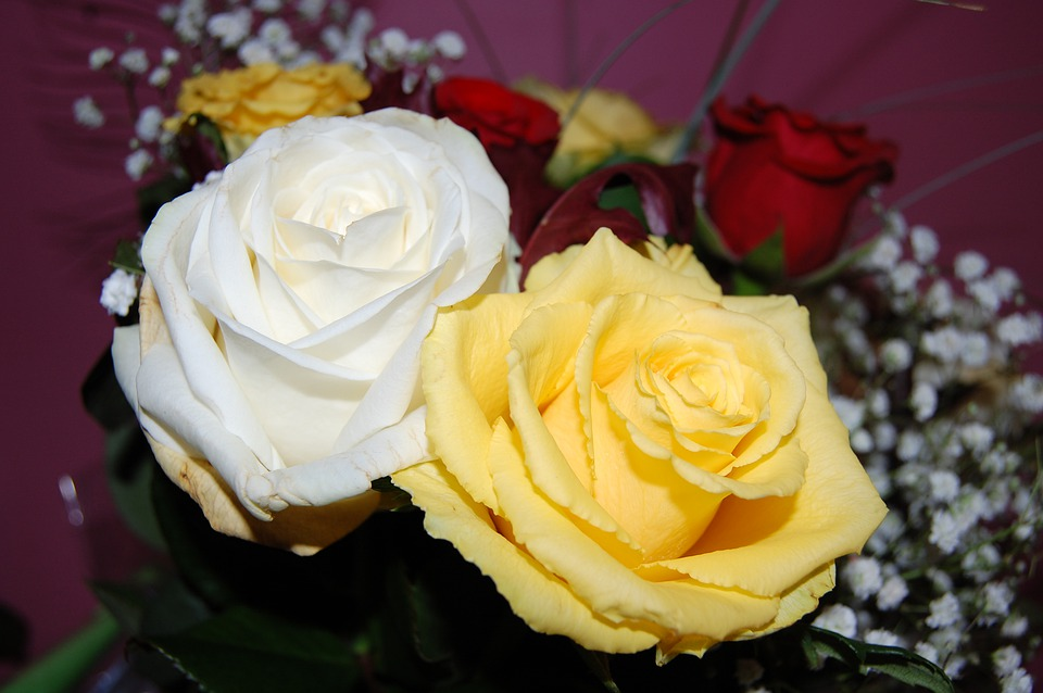 Roses, White, Yellow, Bouquet