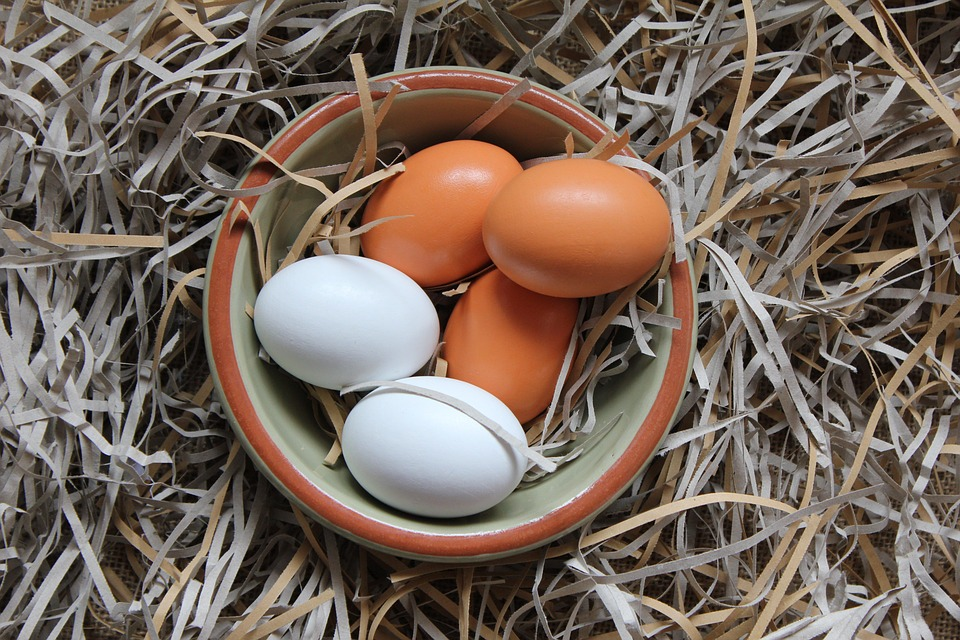 Egg, Bowl, Food, Nature, Nesting Material, Straw