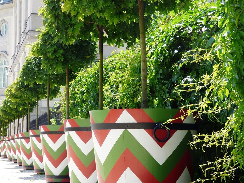 Tree, Shrubs, Bowl, Pots, Pot, Potted, Garden, Green