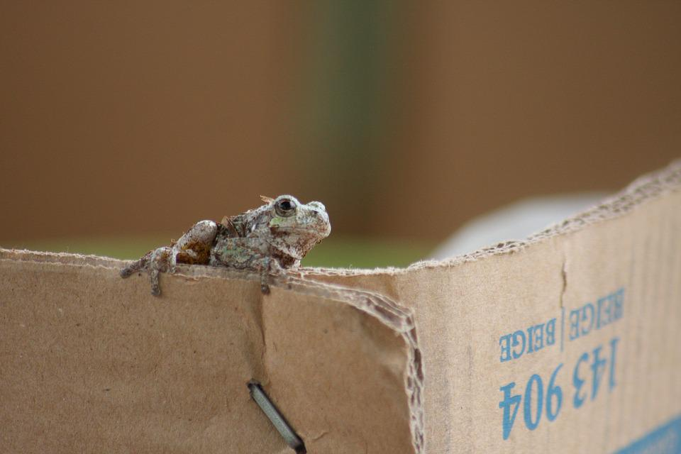Toad, Box, Cardboard, Amphibian, Animal, Brown, Outside