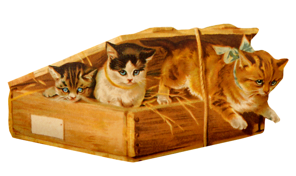 Vintage Cats, Box, Cat, Vintage, Greeting