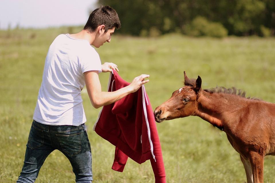 Horse, Boy, Play